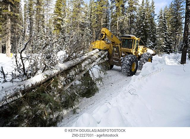 Logging of mountain pine beetle infested timber, Hudson Bay mountain, Smithers, British Columbia