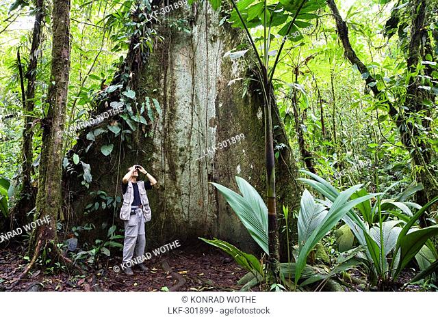 Ornithologist watching birds in a mountain rainforest, Braulio Carrillo National Park, Costa Rica, Central America