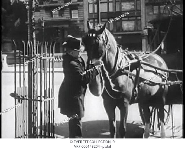 Man attaching feed bag to horse, New York City, 1930s