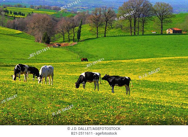 Spring near Marcoles, Cantal, Auvergne, France