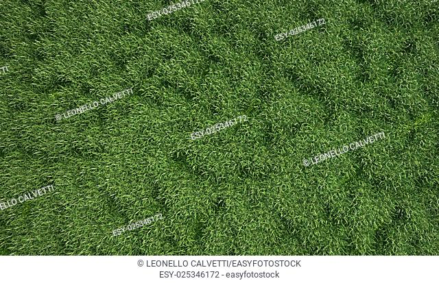A very green and fresh looking grass field, viewed from the top