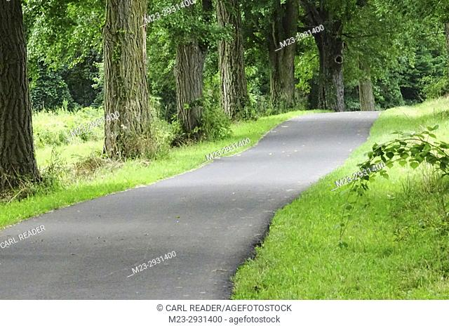 A paved path seems to undulate on its way by trees, Pennsylvania, USA