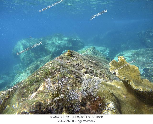 Underwater view, Martinique, Caribbean Sea