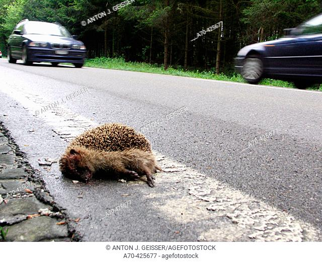 Dead hedgehog