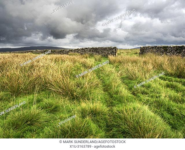 Gate in a dry stone wall in grassland at Gauber High Pasture near Ribblehead Yorkshire Dales England