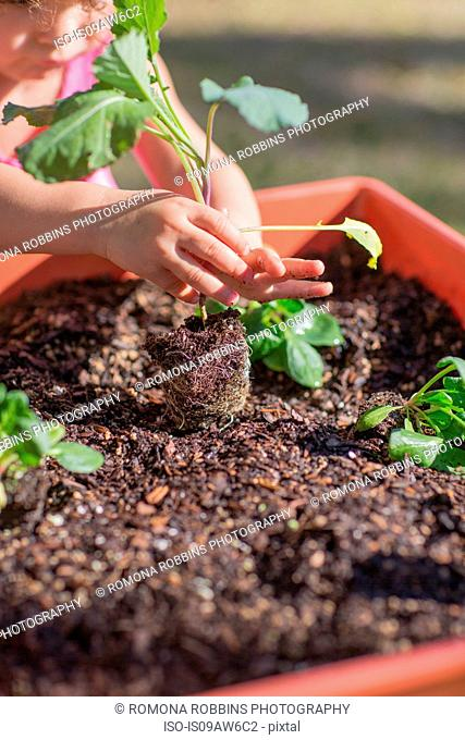 Young girl in garden, planting plant in tub