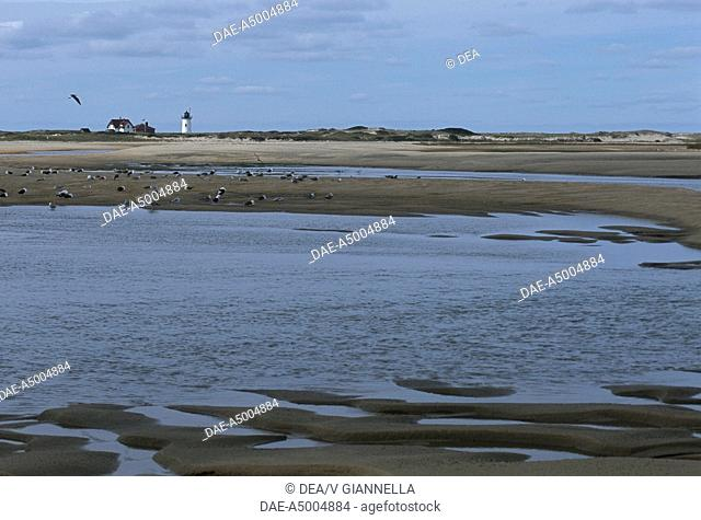 United States of America - Massachusetts - Cape Cod, Race Point. The lighthouse and the beach
