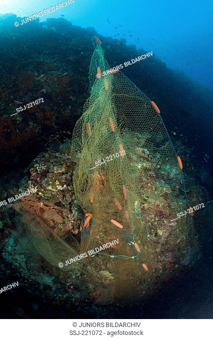 Lost fishing net covers Coral Reef and causes damages, Indo Pacific, Indonesia