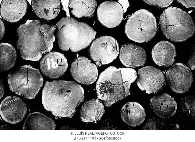 Trunks of felled trees piled in a forest