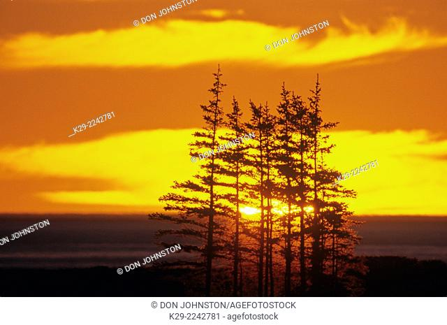 Evening clouds and silhouetted spruce along Hudson Bay coast, Churchill, Manitoba, Canada