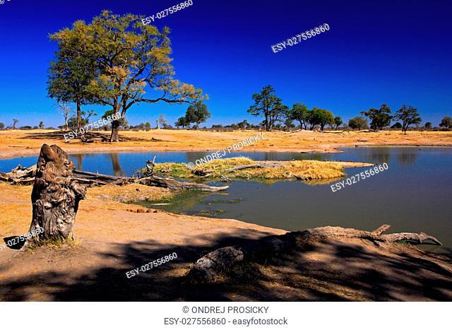 Waterhole in Africa