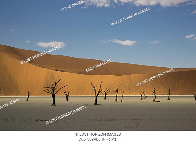 Clay pan with distant dead trees and sand dunes, Deaddvlei, Sossusvlei National Park, Namibia
