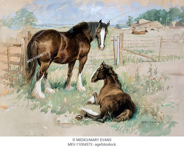 'Contemplation' – two brown and white horses by fence in field, one lying down