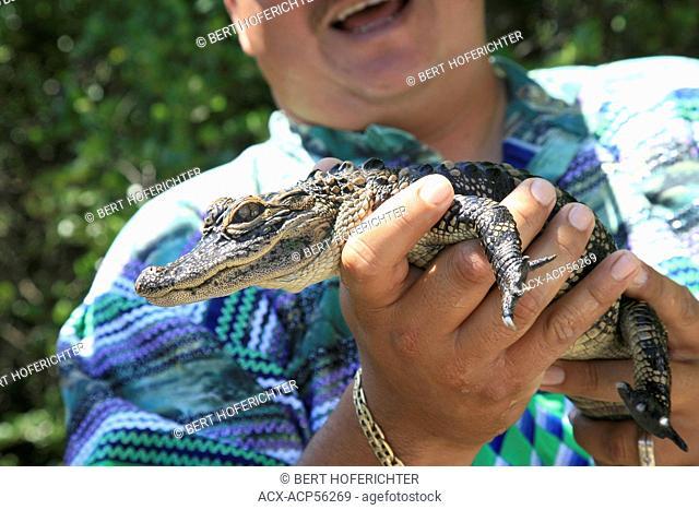 American Alligator, Crocodylus acutus, Everglades National Park, UNESCO World Heritage Site, Florida, USA