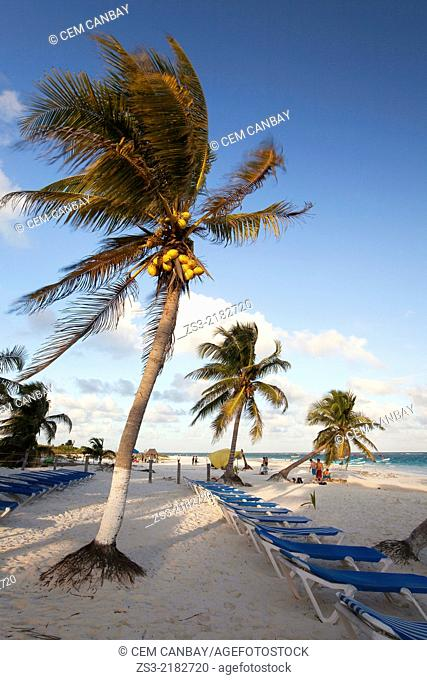 Sunbeds and palm trees at Tulum beach, Tulum, Quintana Roo, Yucatan Province, Mexico, North America