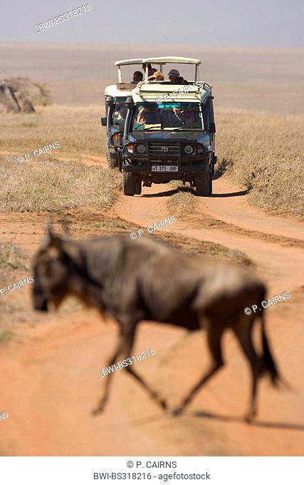 blue wildebeest, brindled gnu, white-bearded wildebeest (Connochaetes taurinus), on migration watched by safari tourists, Tanzania, Serengeti NP