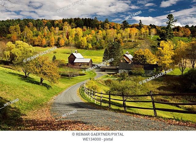 Bright Fall leaves around Sleepy Hollow Farm on Cloudland Road Woodstock Vermont