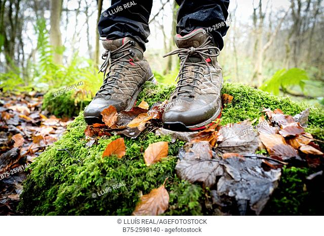 Close-up of feet with a walking boots in a forest, over a wall with moss on a rainy day. Grassington, Skipton, Yorkshiredales, Yorkshire, England, UK, Europe