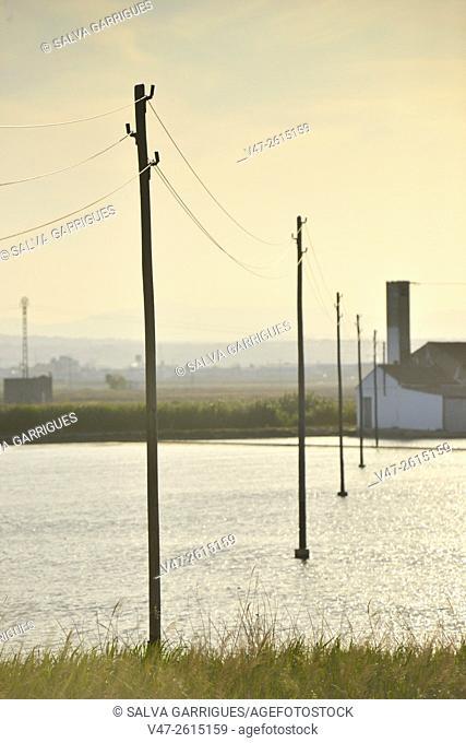 Lampposts on the rice fields, Silla, Catarroja, Valencia, Spain, Europe
