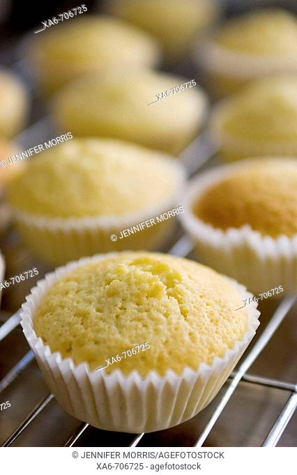 Little golden cupcakes, freshly baked in white cases, sit cooling on a silver rack