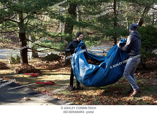 Two male gardeners carrying tarpaulin full of autumn leaves in park