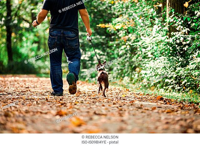 Man walking dog in rural setting, low section, rear view