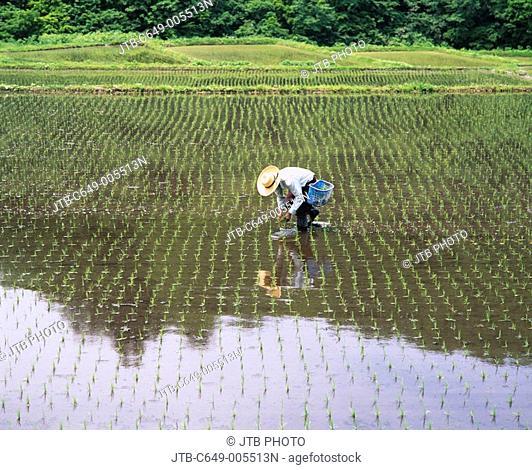 Rice planting Obanazawa Yamagata Japan