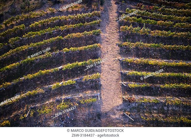 View of the colors of a vineyard in Tuscany in the autumn season