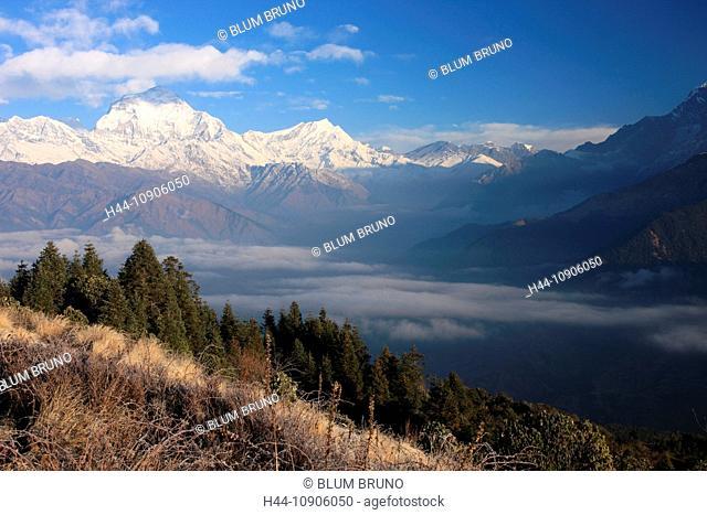Himalaya, Deorali, Poon Hill, Annapurna, Nepal, Asia, Annapurna Circuit, Trekking, Trek, Thorung La, Thorung Pass, Mukinath, Sherpa, atmospheric, romantic