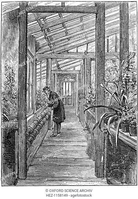 Charles Darwin, English naturalist, c1875, (1887). Darwin (1809-1882) at work in his greenhouse at Down House, his home near Beckenham, Kent