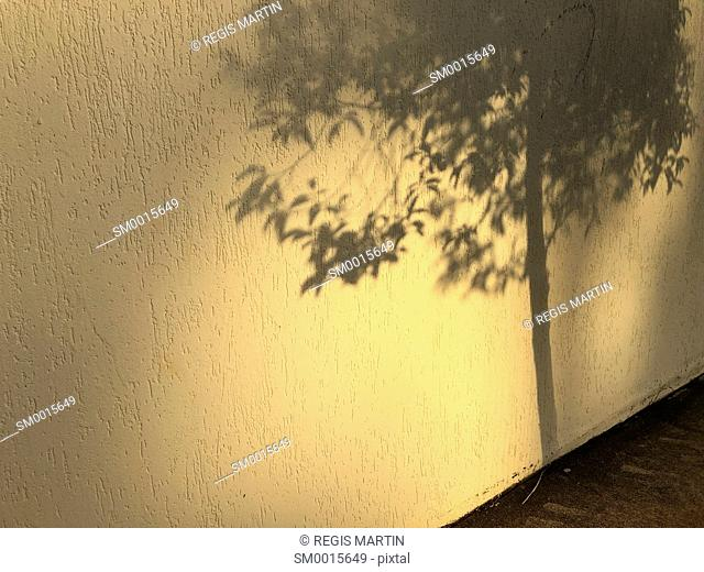 Shadow of a tree against a wall