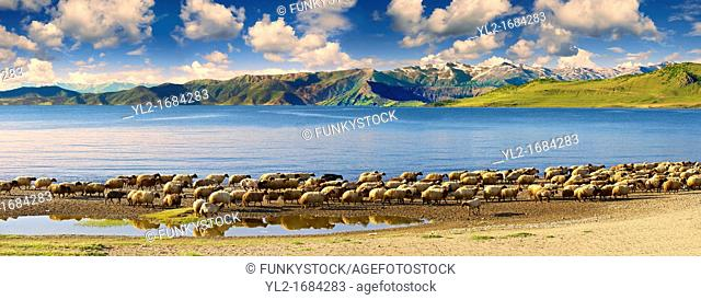 Shoreline of Lake Van, Turkey 1