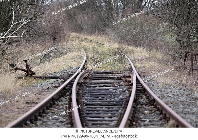28 January 2019, Mecklenburg-Western Pomerania, Bresewitz: The tracks of the former Darß railway between Barth and Prerow are overgrown by nature behind the...