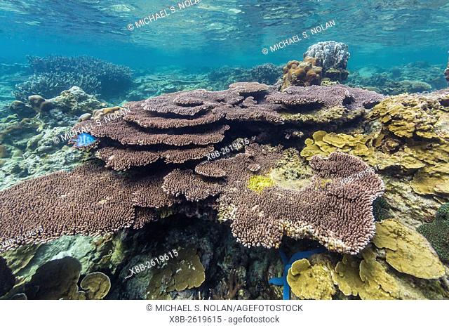 Underwater reef on a remote small Islet in the Badas Island Group off Borneo, Indonesia