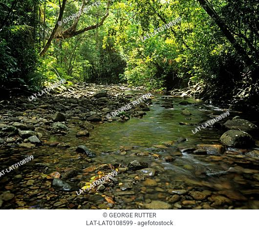 The Daintree Rainforest is over one hundred and thirty-five million years old and among the oldest in the world. Approximately 430 species of birds live among...