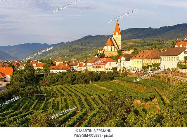 Austria, Lower Austria, Waldviertel, Wachau, Weissenkirchen in der Wachau, Vineyard
