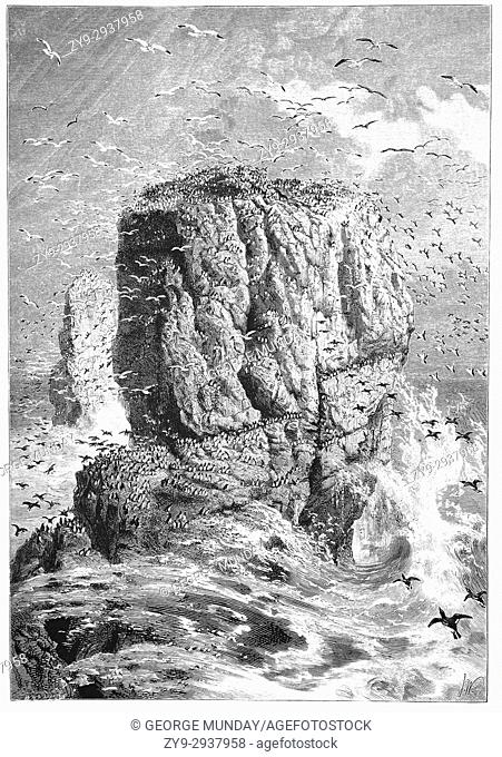 1870: Clouds of seabirds around the Carboniferous Limestone Stack Rocks. Over eons of time, the sea wears away the rock forming an arch