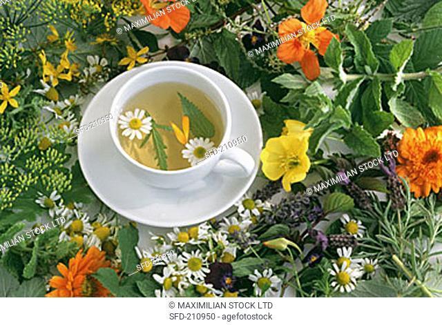 A cup of herb tea among fresh herbs