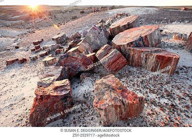 Alien Landscape, Petrified Logs, Petrified Forest National Park, Arizona