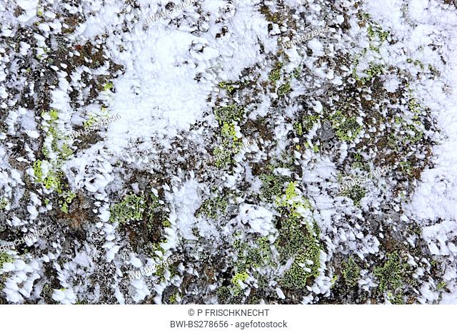snowdrifts on a lichen-covered rock, United Kingdom, Scotland, Cairngorms National Park