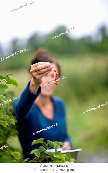 Woman showing red currants