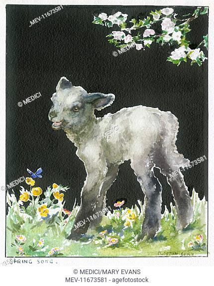 A Lamb standing in meadow with wild flowers, blue butterfly and a branch with pink blossom