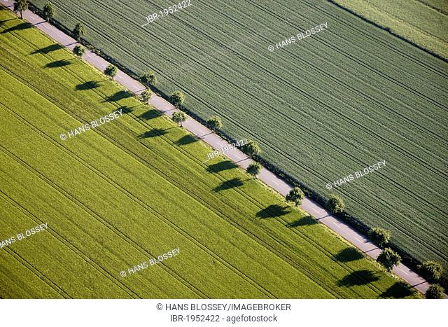 Aerial view, fields, road, trees in a line, Ense, Sauerland region, North Rhine-Westphalia, Germany, Europe
