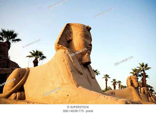 Egypt, Luxor, Luxor Temple, Avenue of the Sphinxes
