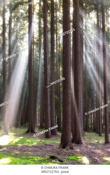 autumn forest scene with sun-rays shining through branches