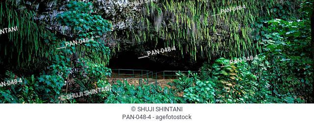Fern Grotto, Wailua River State Park, Kauai, Hawaii, USA