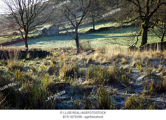 UK, England, North Yorkshire, Yorkshire Dales, scenery of the countryside in the winter with frost