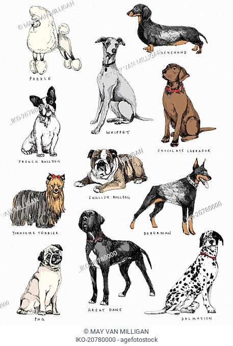Different breeds of dog