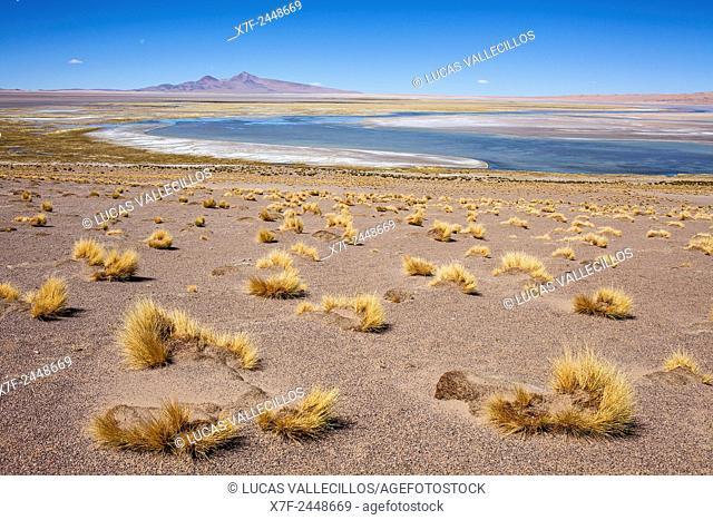 Salar de Tara, Altiplano, Puna, Atacama desert. Region de Antofagasta. Chile
