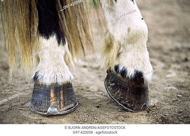 Horse hoofs